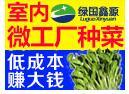 绿国鑫源活体芽苗菜招商加盟