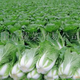 国富蔬菜贸易招商加盟