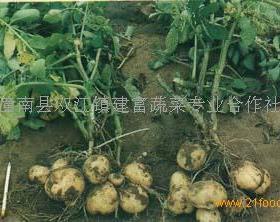 建富蔬菜招商加盟