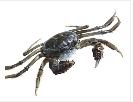 蟹飘香水产招商加盟