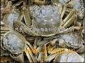 田园生态螃蟹招商加盟