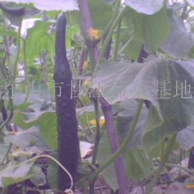 甘江蔬菜招商加盟