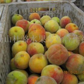 杜骆水果招商加盟