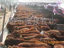 振强牧业农业养殖招商加盟