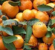 康惠水果招商加盟