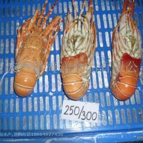 兰星海洋食品招商加盟