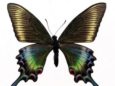 蝴蝶皮革皮草加盟