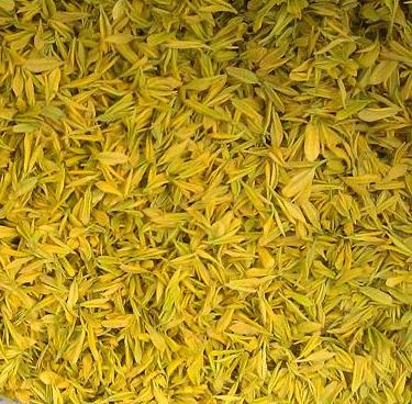 黄金茶业加盟