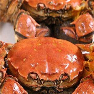 黄河口大闸蟹加盟