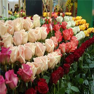 水之緣(yuan)花卉園藝加盟