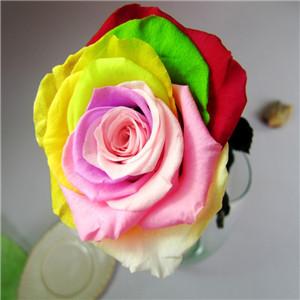 七彩花卉鮮花加盟