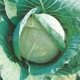金土地蔬菜调味品招商加盟