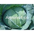 泰祥源蔬菜招商加盟