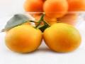 新鲜绿色水果招商加盟
