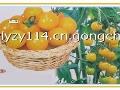 维利亚番茄种子招商加盟