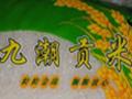 九潮米大米招商加盟