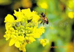 馨诺蜂蜜招商加盟
