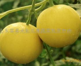 鼎峰瓜果蔬菜招商加盟