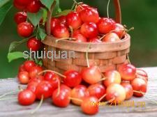 水果类食品招商加盟