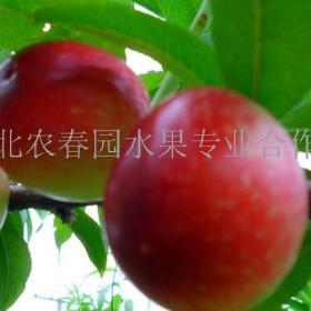 农春园水果招商加盟