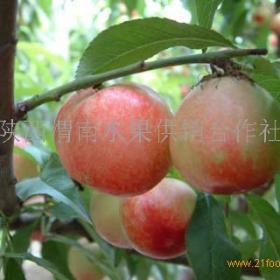 渭南水果招商加盟