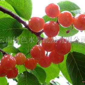云南特色水果招商加盟