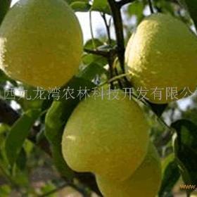 九龙湾水果招商加盟