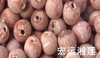 兴宏运湘莲食品招商加盟